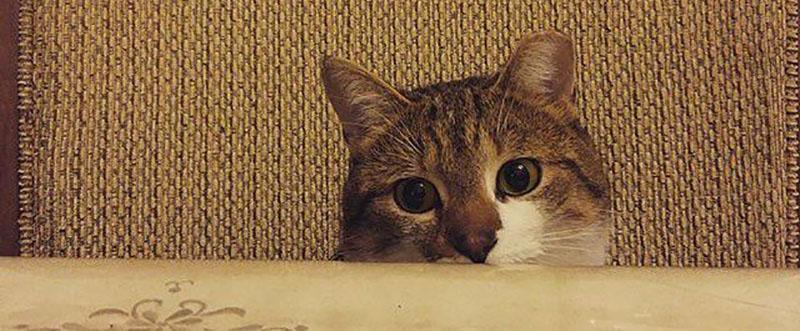 How I met my kitty Beau.
