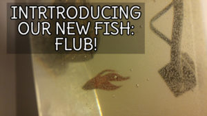 Introducing our new fish: Flub!