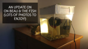 An Update On Beau & The Fish (Photo Update)