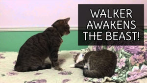 VIDEO: Walker Awakens the Beast!