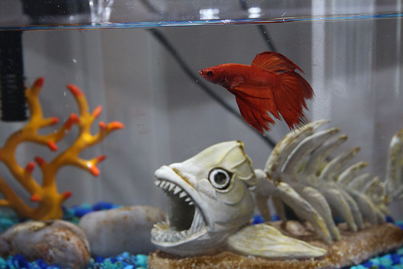 Why Fish Are A Great First Pet For Children Pets Overload