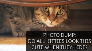 PHOTO DUMP: Do All Kitties Look this Cute when they Hide?