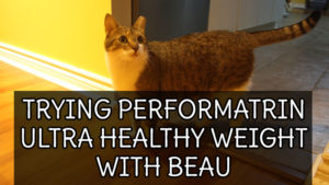 Trying Performatrin Ultra Healthy Weight with Beau