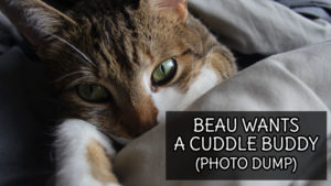 Beau Wants a Cuddle Buddy (Photo Dump)