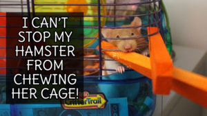 I Can't Stop my Hamster From Chewing Her Cage!