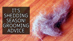 It's Shedding Season! It's Grooming Time!!