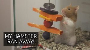 MY HAMSTER RAN AWAY!