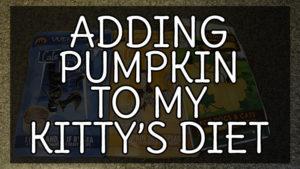Adding Pumpkin to my Kitty's Diet