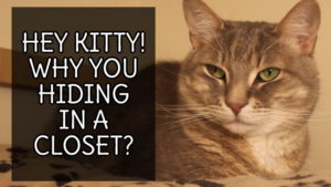 Hey Kitty! Why you Hiding in a Closet?