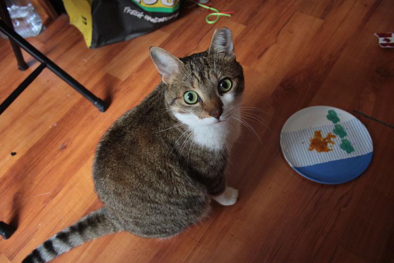 beau-eating-pumpkin-cat-adorable