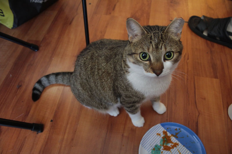 beau-eating-pumpkin-cute-adorable-cat