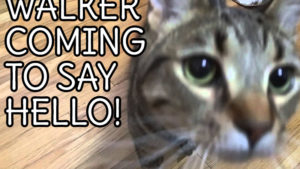 VIDEO: Walker Coming to Say Hello!