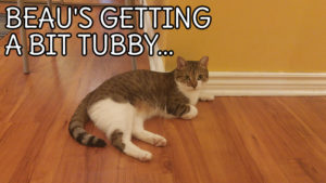 Beau's getting a bit tubby…