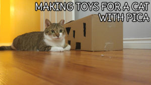 Making Toys for a Cat With Pica