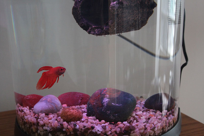 flub-fish-tank-new-gravel-betta