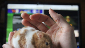 Can Hamsters Eat Guinea Pig Food? Is it As Healthy? Is it Safe?