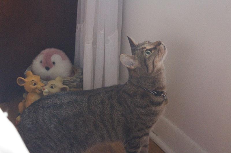 walker-pouncing-sunlight-window-bright-cat-kitten