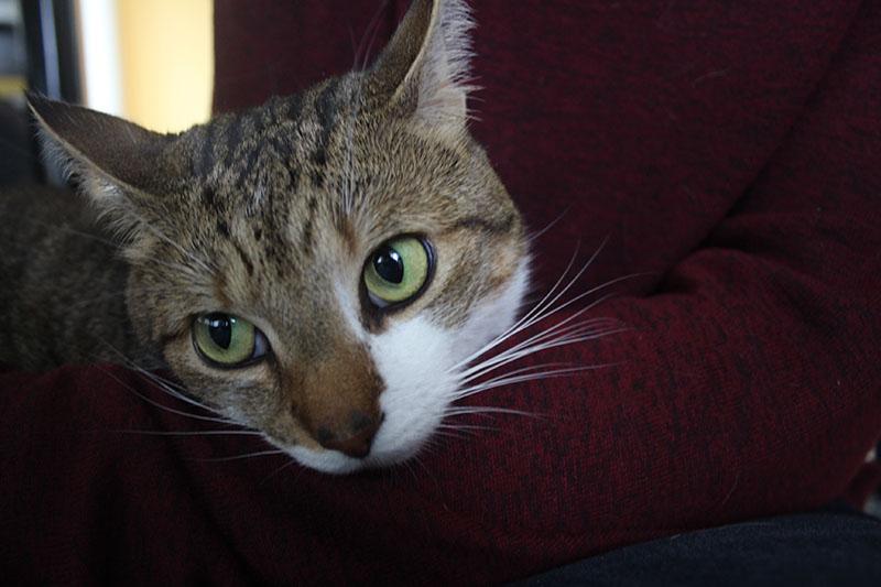 beau-big-eyes-round-green-cat-kitten-cute