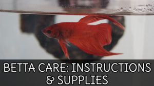 BETTA FISH CARE GUIDE: Aquarium Setup & Supplies