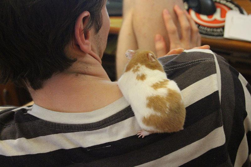 twitch-climbing-hamster-white-best-friends