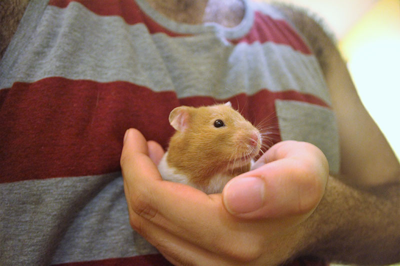twitch-hamster-mirror-cute-small-mammal