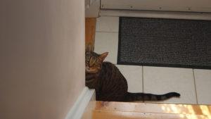 Beau & Walker Won't Stop Meowing (Cute Cat Video)
