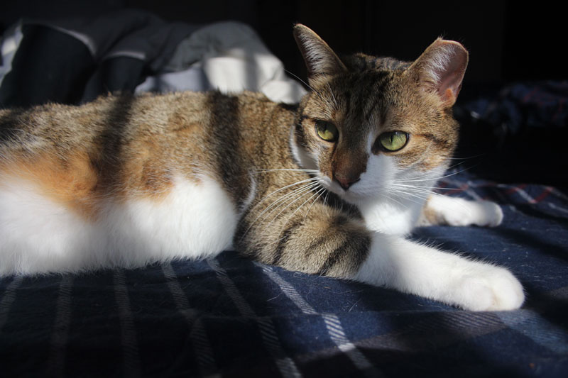 beau-sitting-bed-cute-sunlight-cat