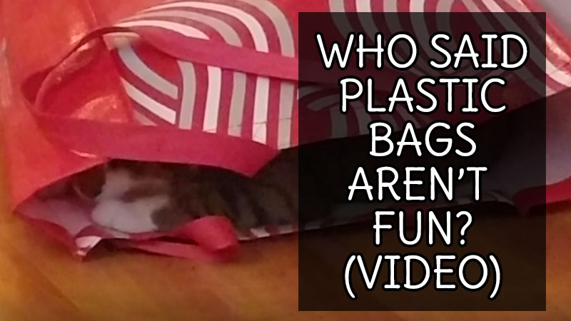 who-said-plastic-bags-arent-fun-video
