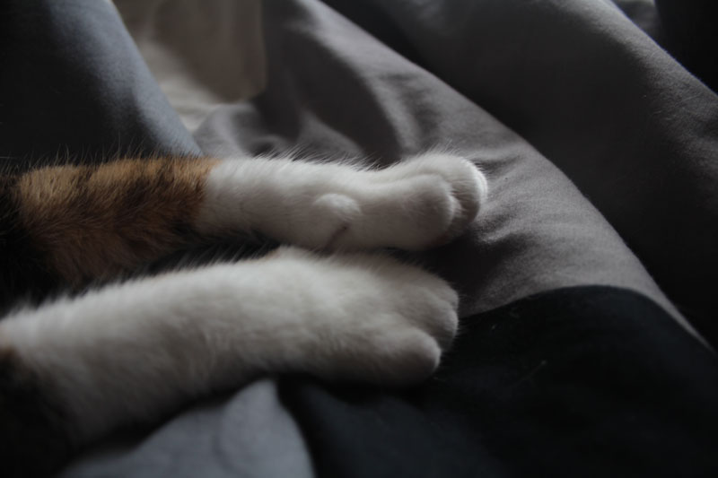 beau-paws