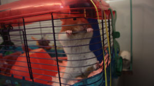 Top List of Best Hamster Travelling Cages