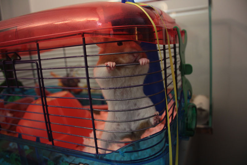 twitch-climbing-cage