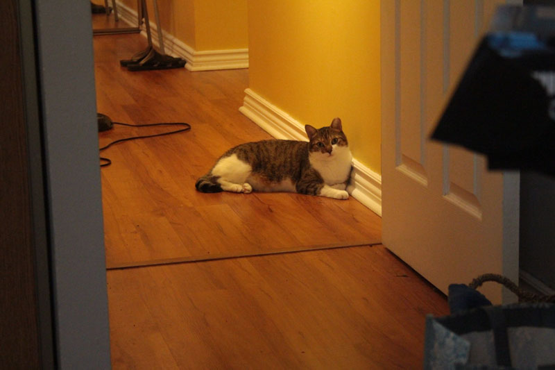 beau-lying-in-hallway
