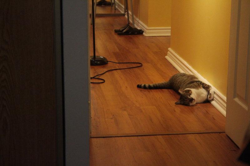 beau-sleeping-in-hallway