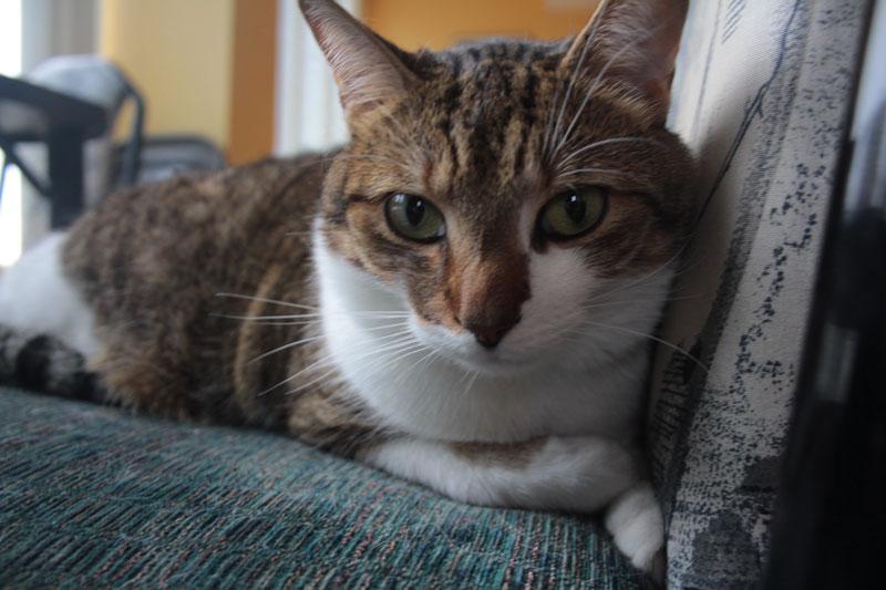beau-sitting-on-chair