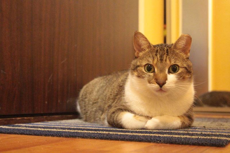 beau-sitting-on-mat