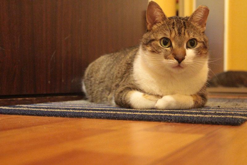 beau-sitting-on-mat-2