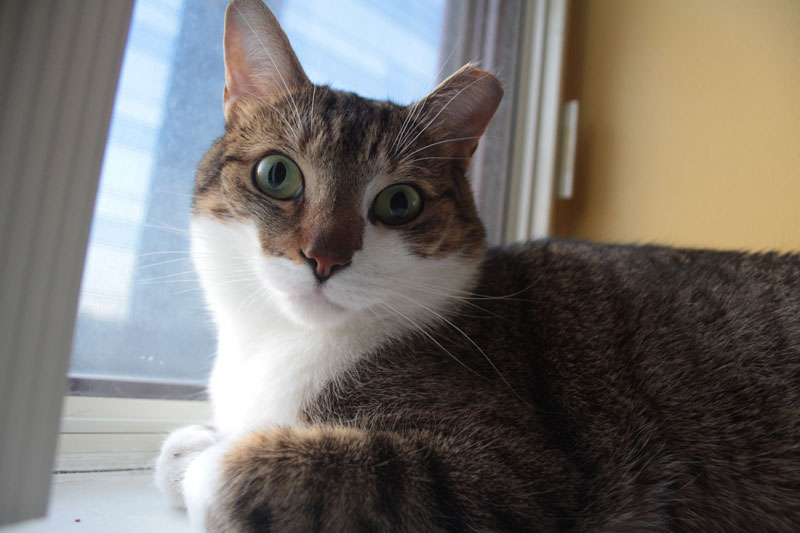 beau-sitting-in-window