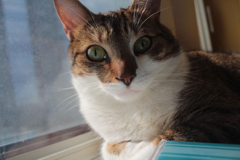 beau-sitting-in-window-2