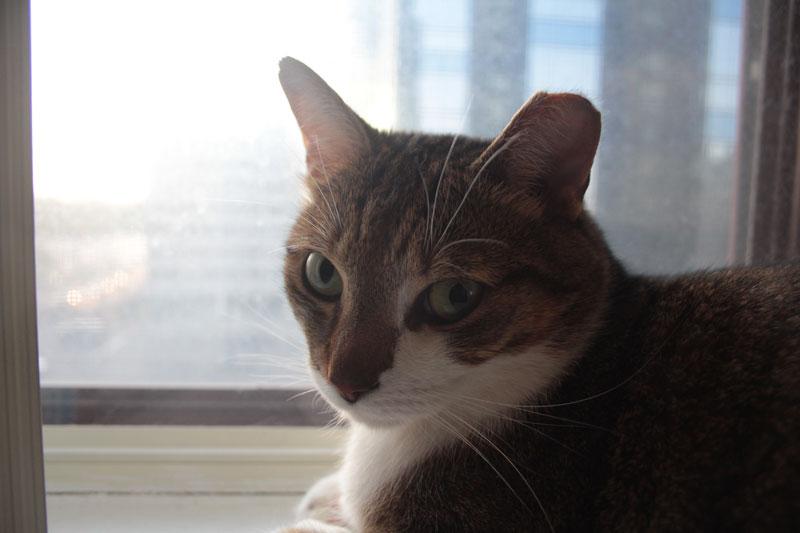 beau-sitting-in-window-3