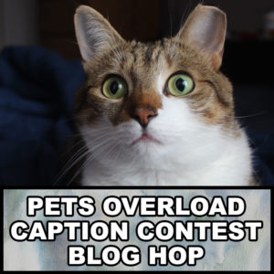 pets-overload-caption-contest