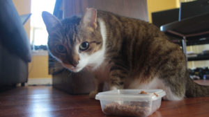 Thankful Thursday: Finally finding a wet food Beau eats consistently!
