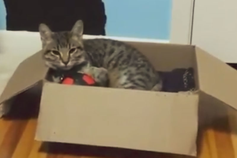 walker-sleeping-in-box