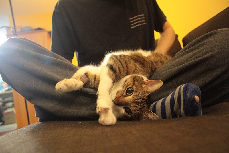 beau-stretching-on-dads-lap