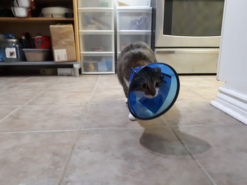 beau-walking-in-cone