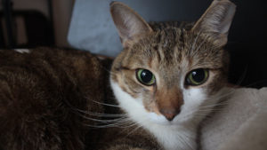 An Update about my cat's PU Surgery & Double Cystotomy