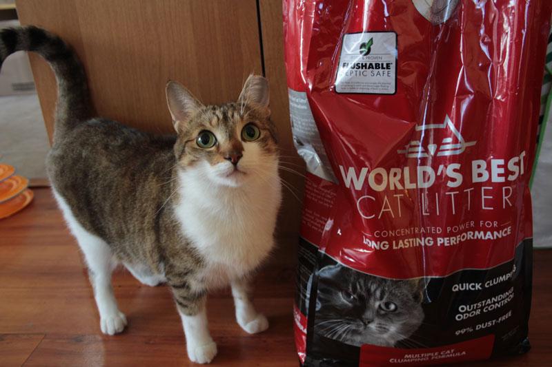 worlds-best-cat-litter-multi