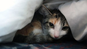 Our Medical Scare When We First Got Kalista (Cute Cat Story)