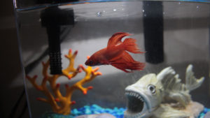 Our Top & Bottom Betta Fish Tanks (And why we like/dislike them!)