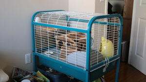 Top List of Our Favourite (And Inexpensive) Chinchilla Cages