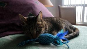 REVIEW: SPOT Elasteeez Catnip Cat Toy